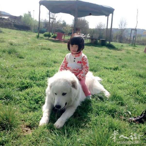 四岁的狗狗,送人有要的吗?微信:huang120397