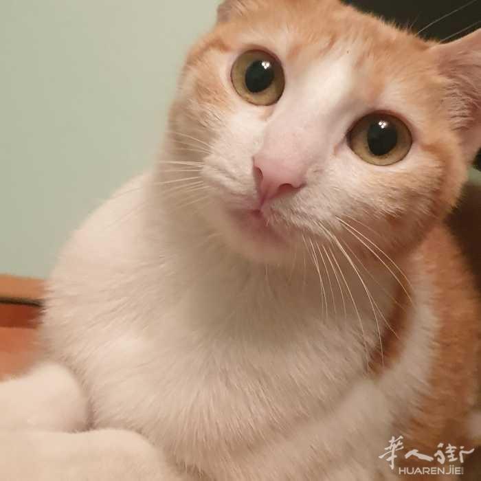 给猫找个有爱心的主人。