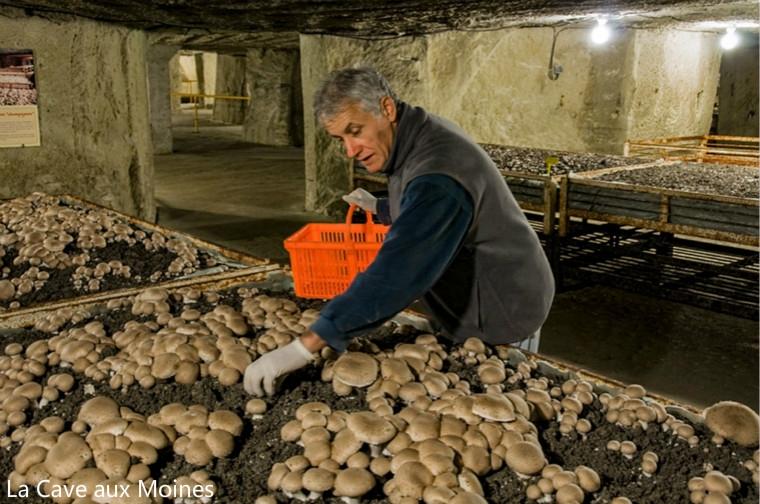 le-musee-du-champignon-09-803869_meitu_6.jpg