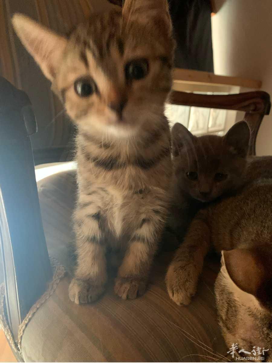 给2只小猫咪找家