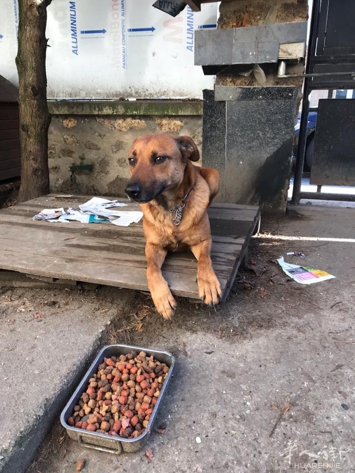 送一只4岁牧羊犬和土狗混种的狗.另附二袋狗粮.如有爱狗者请短信联系:062328