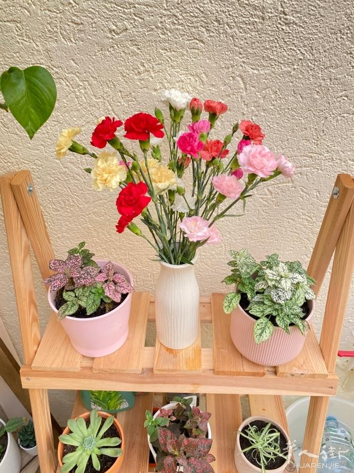 喜欢养花的朋友可以互相交流心得