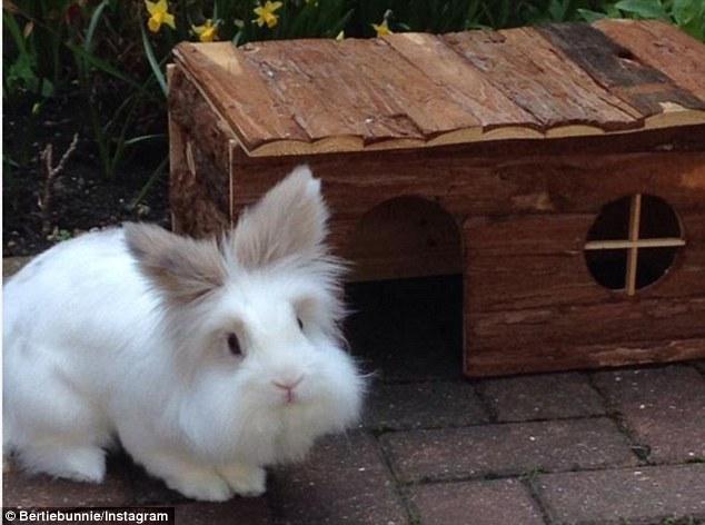 可爱动物图片小兔