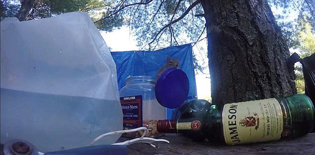加松鼠拧罐头偷吃坚果引露营者互相抱怨