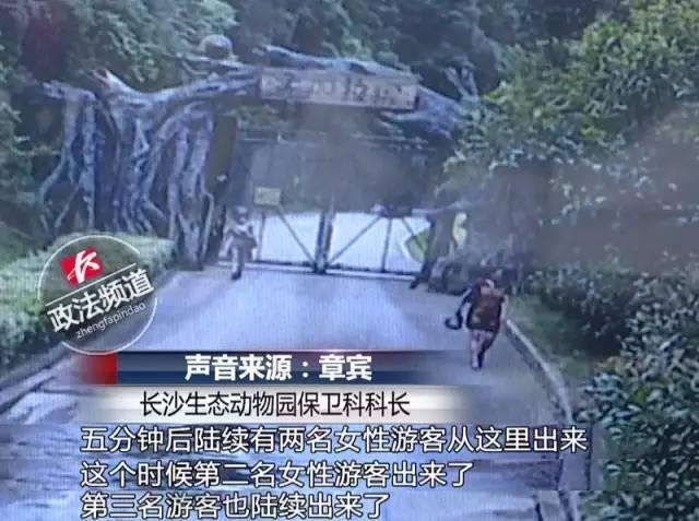 2女1男为逃票翻墙进动物园 落地时周围站了7只虎