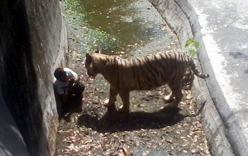 新媒看中国游客翻墙进动物园:为省钱冒生命危险